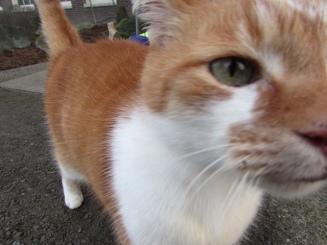Flynn the cat