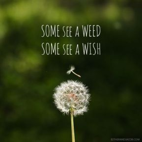 Some see a seed